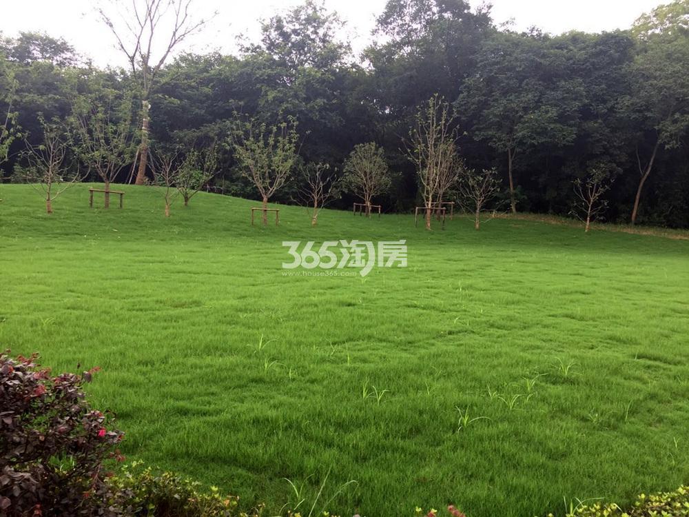 绿城东方玉园实景图